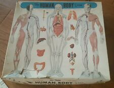 Vintage 1959 Human Body Model Kit, skeleton, organs, & body, 1/6 scale, complete