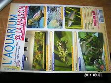 L'Aquarium à la maison n°48 Hippocampes Coraux Leptosoma jumbo Coupe verre