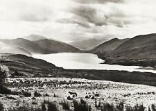 1934 Vintage 11x14 SCOTLAND ~ Loch Broom Livestock Mountain Landscape Photo Art