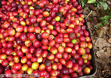 3 lb. Colombian Supremo Huila Estate Raw Unroasted Green Coffee Beans
