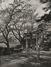 1929 JAPAN Vintage Photo Gravure HONMOKU CHERRY BLOSSOM Flower Tree Art FELLNER