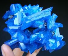 Large & Nice - TOP Luster Electric Blue CHALCANTHITE on MATRIX from POLAND