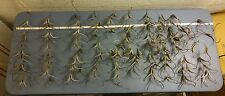 """100++ Devil's Claw Seed Pods Great for Crafting """"Harpagophytum Procumbens"""" Wild"""