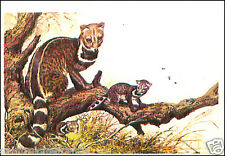 Civette indienne Small Indian civet  AUTOCOLLANT STICKERS IMAGE ANNEES 60s