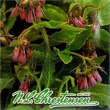 COMFREY (Symphytum Officinale) 30 seeds (#1113)