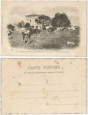CPA postcard animal cow vache Le Grand Marchais → SAINT SEVERIN 16 Charente 843R