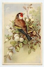 Chardonneret .Oiseau. Bird. GOLDFINCH .