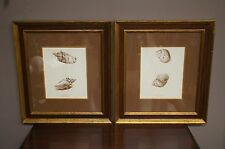 2 Wonderful John Richard Biological Engravings Shells Voluta Pacifica Achatina