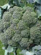 8000 seeds Waltham 29 Broccoli  Non-GMO Heirloom seed   New seed for 2017