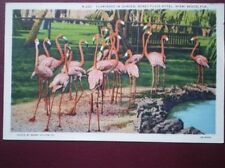 POSTCARD USA MIAMI BEACH - FLAMINGOS IN GARDEN RONEY PLAZA HOTEL