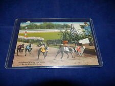 Vintage Greyhound Racing In Florida At The Finish Line Used Postcard