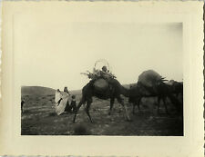 PHOTO ANCIENNE - VINTAGE SNAPSHOT - ANIMAL CHAMEAU DROMADAIRE MAGHREB - CAMEL