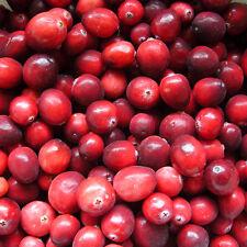 Arandano Rojo (American Cranberry - Vaccinium Macrocarpon) 15 Semillas Seeds