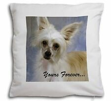 Chinese Crested Powder Puff Dog Soft Velvet Feel Scatter Cushion C, AD-CHC3y-CPW