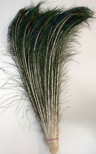 "25 Pcs PEACOCK SWORDS Natural Feathers 30""-35"" Craft/Pad/Decor/Costume/Hats/Art"