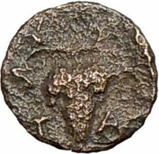 Temnos Aiolis 350BC Rare Ancient Greek Coin Dionysos Wine God Grapes  i28088