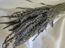 NATURAL AIR DRIED PURPLE BLUE FRENCH GROSSO LAVENDER FLORAL FLOWER