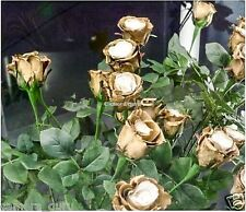 Amazing Golden Rose Flower Seeds 8 seeds Pack
