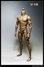 1/6 Very Hot Accessory Set - V1-M Male Muscular Body For Dam Hot Toys TTM19 HT