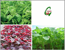 Leafy Vegetable Seeds Combo Pack 3 in 1: Palak, Spinach Red & Green 10 Gms Each