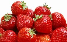 Strawberry Cookbook, 423 Recipes eBook in PDF on CD FREE SHIPPING