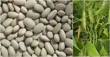 300 'White Dixie Butter Pea' Lima Bean Seeds,Heirloom pole type