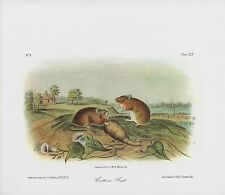 "1989 Vintage ""COTTON RAT"" FABULOUS FARM SCENE AUDUBON MAMMAL COLOR Lithograph"