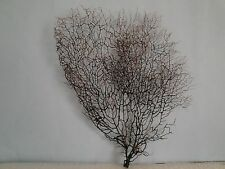 "11""x 12"" Black Gargonia Sea Fan Fish Tank Seashells Reef Coral"
