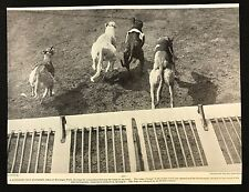 1934 Dog Print / Bookplate - GREYHOUND, Go!, Dogs leave traps at Harringay Park