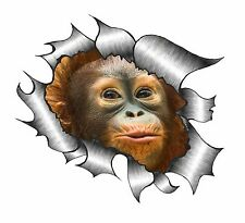 Rip Ripped Torn Metal Look Design & Cute Baby Orangutan Monkey vinyl car sticker