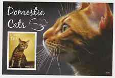 [D*] St Kitts - Domestic Cats, 2015 - S/S MNH