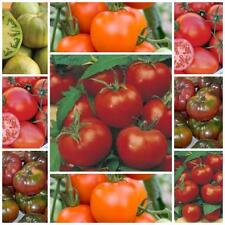 TOMATO SEEDS HEIRLOOM COLLECTION  5 VARIETIES 125 SEEDS GREAT FLAVOUR