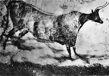 BF40725 bovide montignac sur vezere lascaux peinture rupestre cave painting