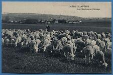 CPA: scène champêtre - Les Moutons au Pâturage