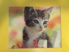 Art Print : Cute Kitten 11 X 14 MATTED CALENDAR PRINT