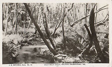 Real photo Mitchell series postcard Lilly Pilly Gully Wilson's Prom Victoria