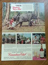 1955 Canadian Club Whiskey Ad Siamese Tug of War