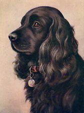 COCKER SPANIEL CHARMING DOG GREETINGS NOTE CARD BEAUTIFUL BLACK DOG HEAD STUDY