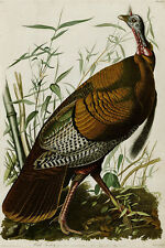 Large 12x18 Wild Turkey Audubon Aviary Bird Painting Real Canvas Fine Art Print