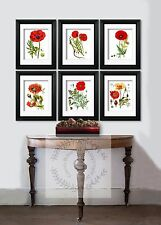 Botanical Art Prints set of 6 Memorial Day Poppies Poppy Day Flower wall Hanging