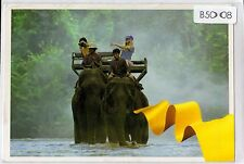 B5008pac Animals Elephants Thai Airlines postcard