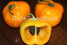 Peruvian Yellow Rocoto - An Unique Chilli that is Different from other Chilli