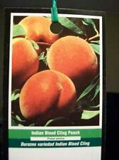4'-5' INDIAN BLOOD CLING PEACH Fruit Tree Plant Trees Grow Your Healthy Peaches