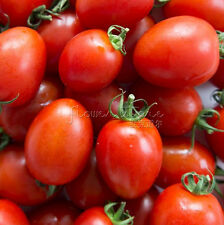 100 Juicy Tomato Roma Seeds delicious and juicy Tatsy Sweet and Sour