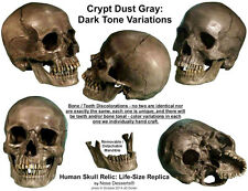 """Authentic Human Skull-Life Size Replica Aged Relic """"Crypt Dust Gray"""" From USA"""