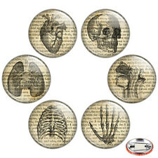 "Vintage Anatomy Illustration 1.25"" Pinback Button BADGE SET Novelty Pins Medical"