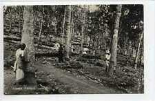 (Gq565-407) Real Photo of Rubber Tapping, Ceylon Sri Lanka c1940 Unused EX