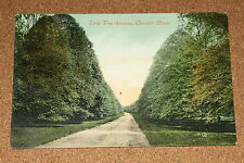 Vintage Postcard: Lime Tree Avenue, Clumber House, Nr. Worksop, Nottinghamshire