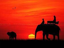 SILHOUETTE RED SUNSET Éléphants Afrique photo Art Imprimé Poster Photo bmp1505a
