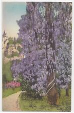 Postcards/So. Carolina-Wisteria in its Glory, Summerville SC-(divided, unposted)
